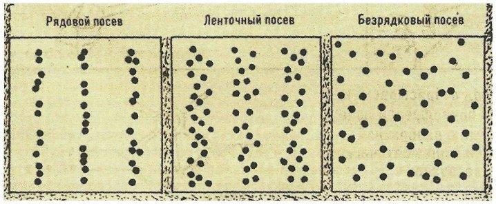 Распределение семян в рядковом, безрядковом и ленточном посевах