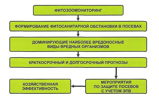 Особенности организации защиты растений.